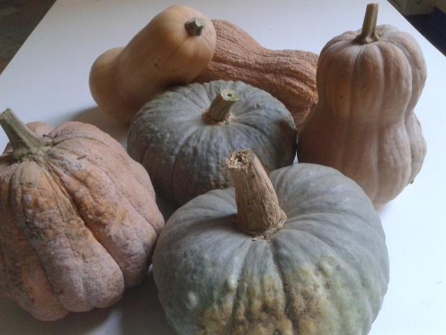 Orto autunno zucche